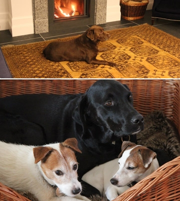 dogs-content-image