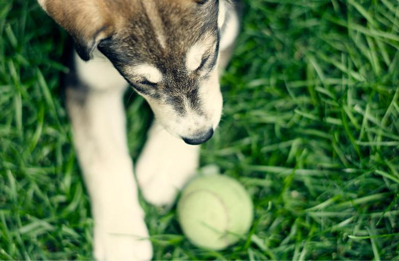 dogs-header