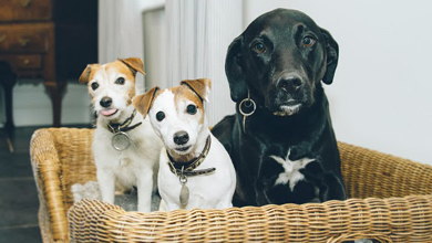 half-half-dogs