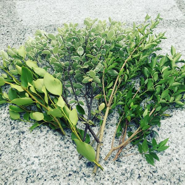 foliage600